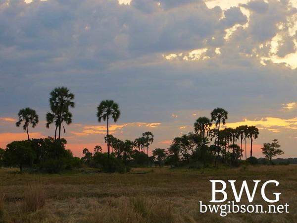 Palm Tree Sunset